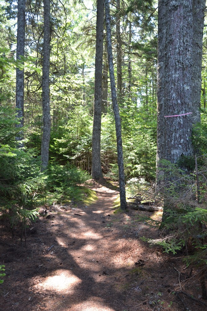 Well-marked trail through the forest (Credit: Maine Trail Finder)