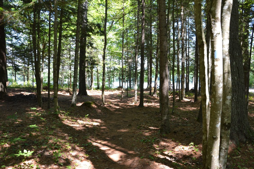 Returning to the trailhead via the inland section of trail (Credit: Maine Trail Finder)