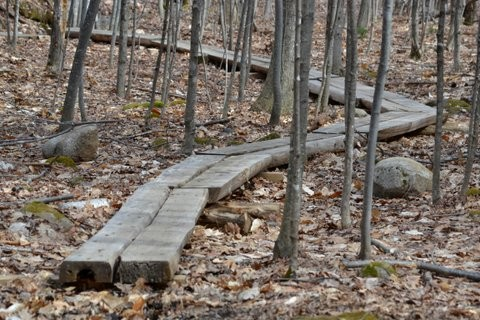Plank bridging on the trail (Credit: Brian Kent)