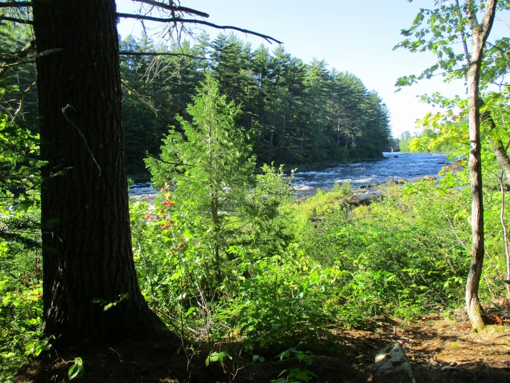 East Branch from the Grindstone Falls Trail (Credit: Evan Watson)