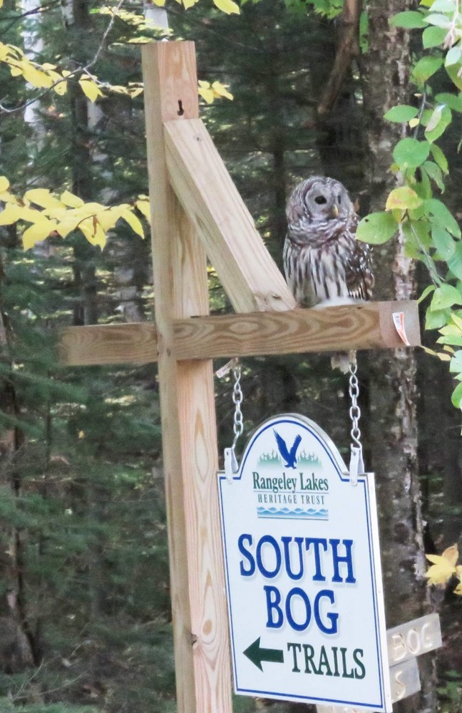 Welcome to South Bog (Credit: Bonnie Folnsbee)