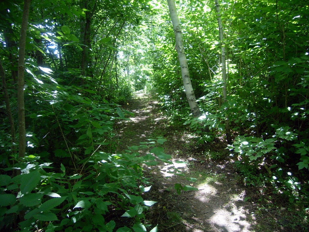 Riverside Trail North next to the Fish River  (Credit: Aroostook Outdoors)