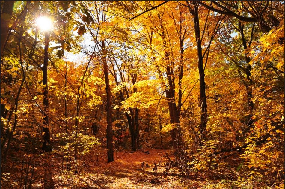 Park trails in the fall (Credit: Friends of Clifford Park)