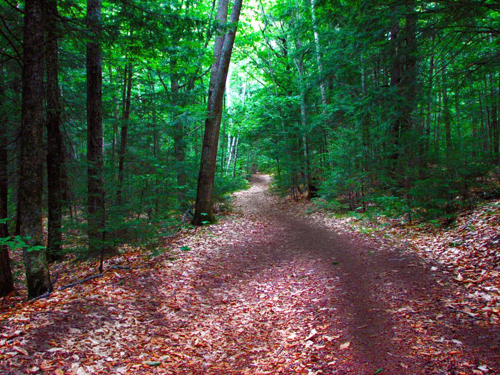 Quiet Oasis in Farmington (Credit: Center for Community GIS)