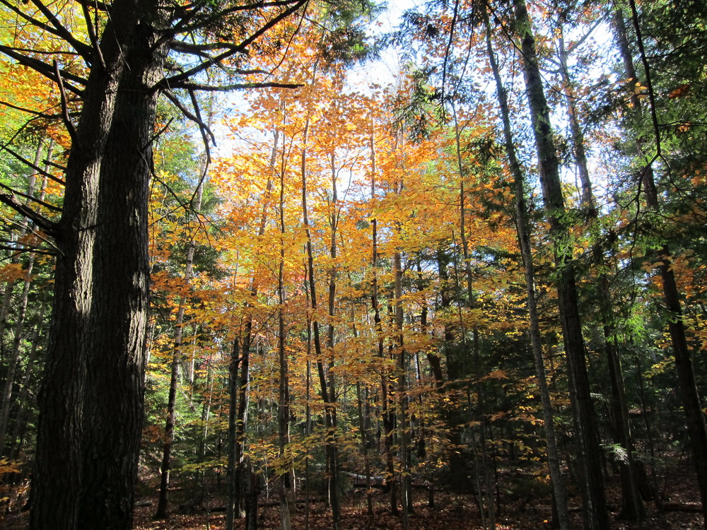 Fall color on French Mountain trail going up (Credit: M.Morris)