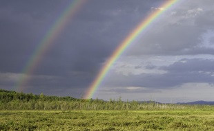 Harper's Meadow (Credit: Mary Konchar)