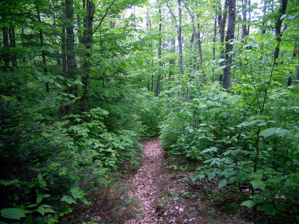 Hedgehog Mountain's forest floor trail (Credit: Aroostook Outdoors)