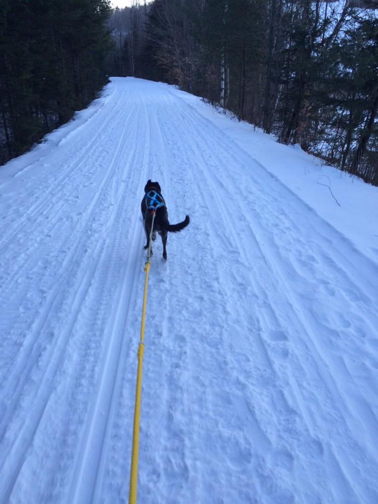 Skijoring along the trail (Credit: Steve Engle)