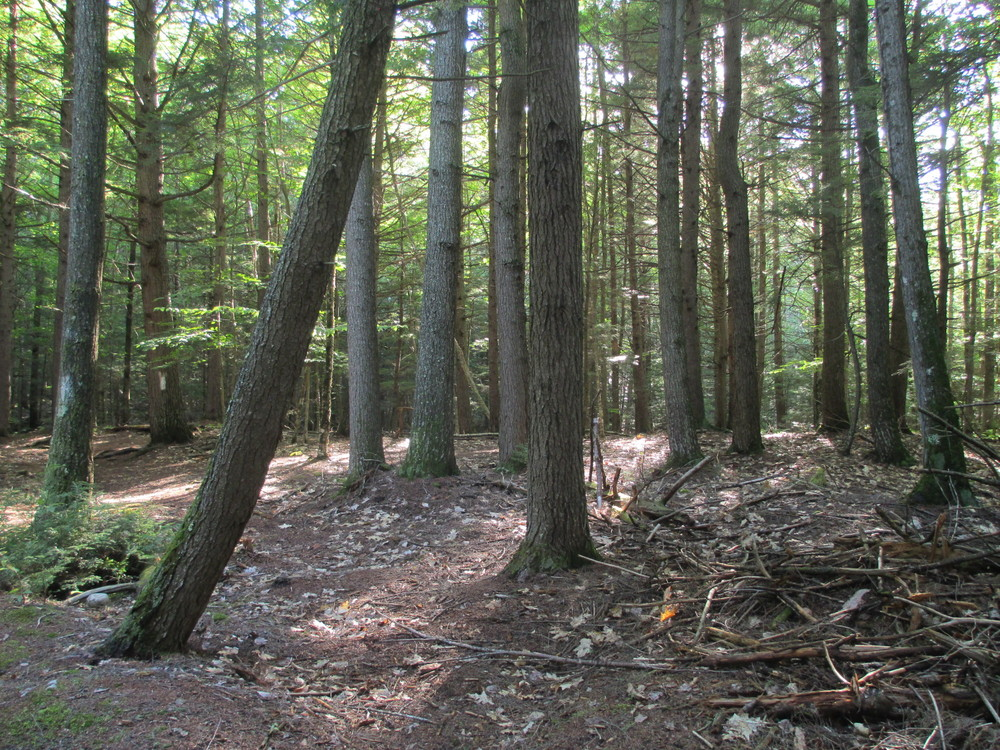 'Enchanted Forest' an old pine forest on the preserve's white trail (Credit: Maine Trail Finder)