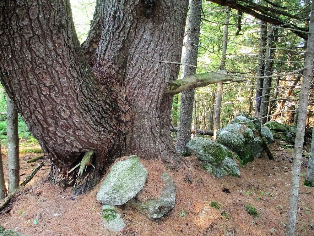 Stonewalls run the perimeter of the property (Credit: Maine Trail Finder)