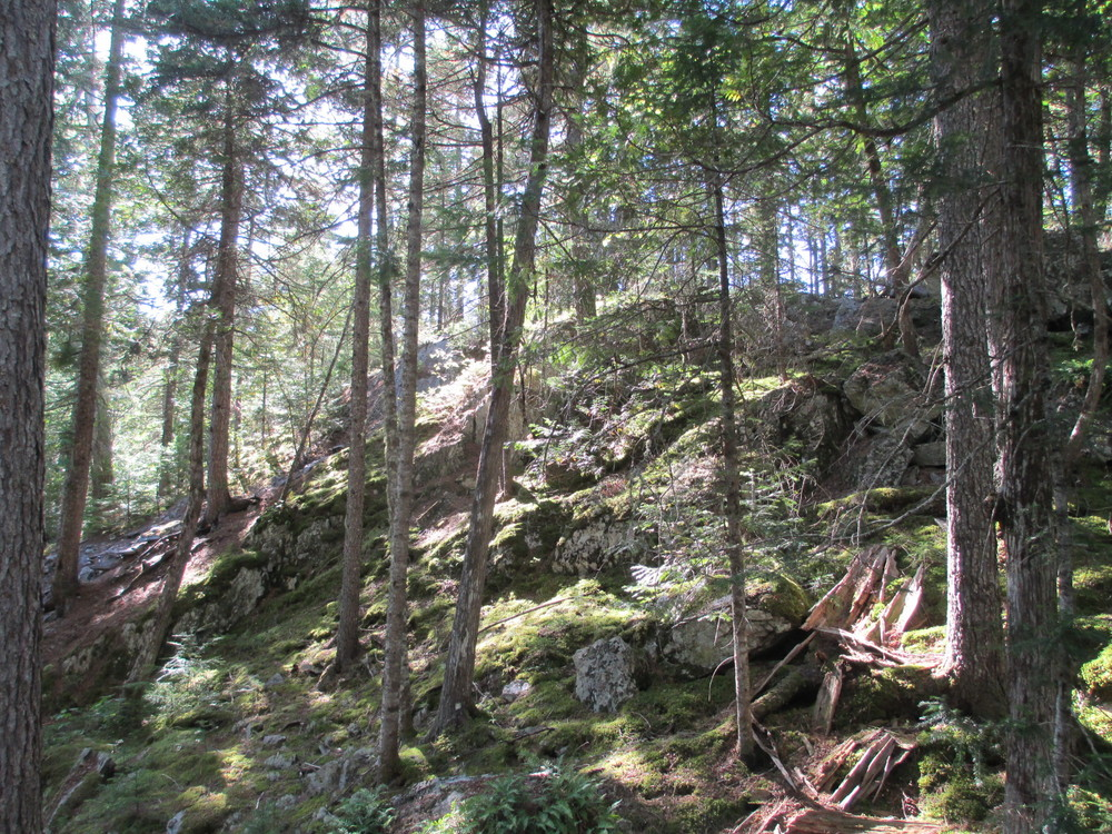 Moss and lichen forest on Grand Pitch portage (Credit: Maine Trail Finder)
