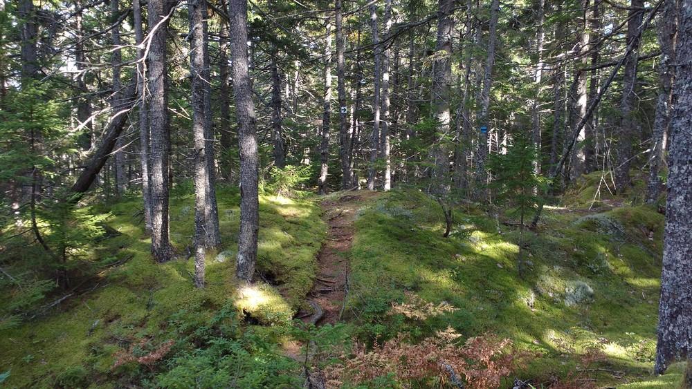 Border Trail (Credit: Dawn Charnetzky)
