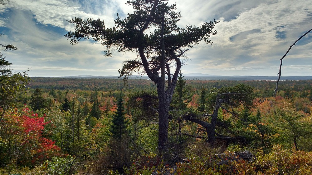 Looking out at Schooner Head and Cadillac Mountain (Credit: Dawn Charnetzky)