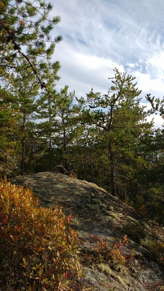 Jack Pine Trail (Credit: Dawn Charnetzky)
