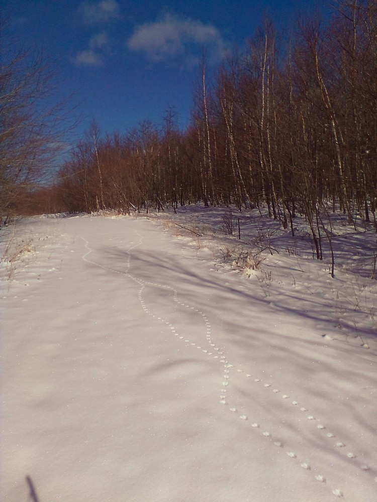 Fresh tracks for all - hitting some powder before the groomer (Credit: Maine Trail Finder)