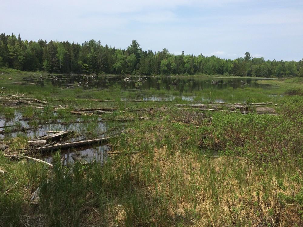 Mooselookmeguntic wetlands (Credit: Maine Trail Finder)