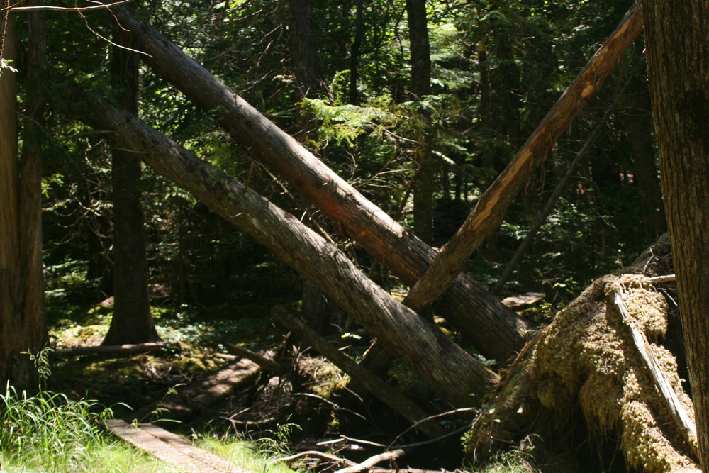 Precarious Tree Trunks Hang Over the Trail (Credit: L. L. Wall (Panoramio))