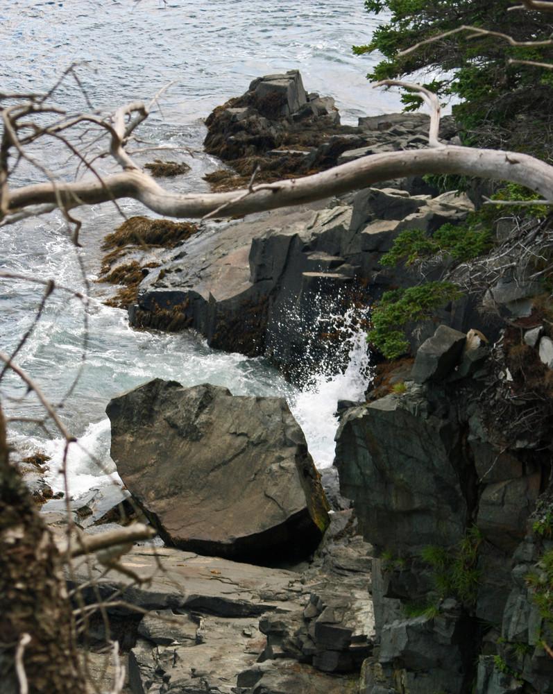 Splashing on the Bold Coast (Credit: L. L. Wall)
