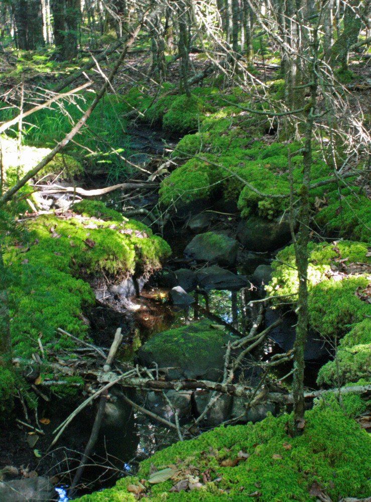 Mossy Brook (Credit: L. L. Wall (Panoramio))