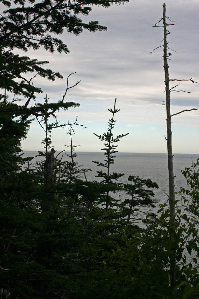 Coast Guard Trail, north of lighthouse (Credit: L. L. Wall @Panoramio)