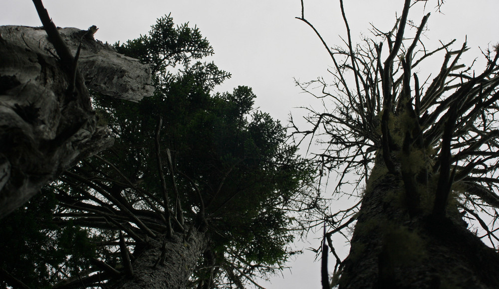 blasted by nor'easters on the Coast Guard Trail (Credit: L. L. Wall @ Panoramio)