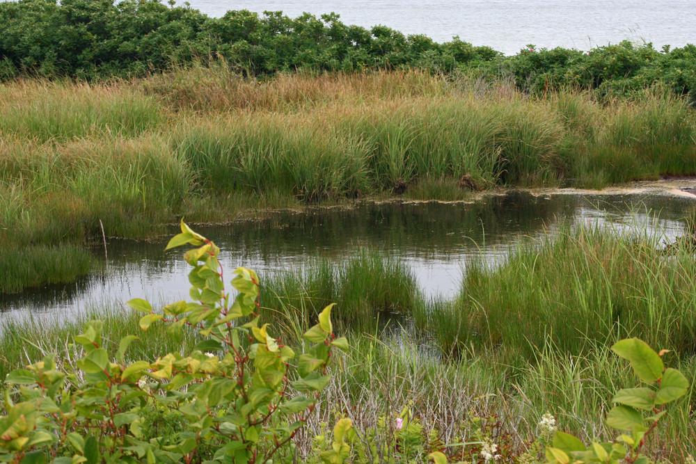 Freshwater Swale (Credit: L.L.Wall)