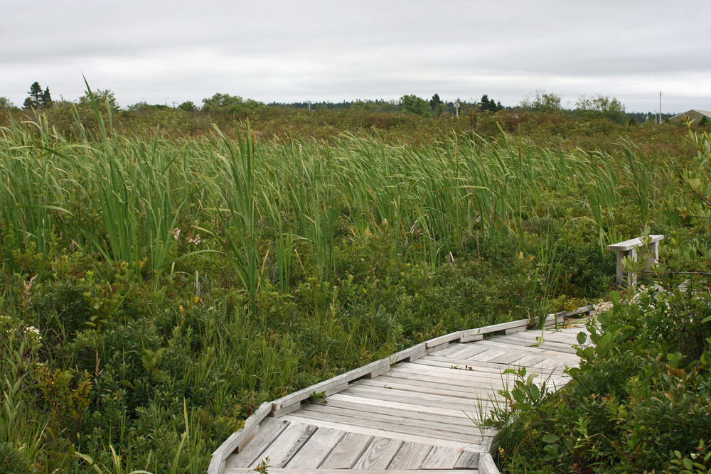 A Bench in the Cattails (Credit: L.L.Wall)