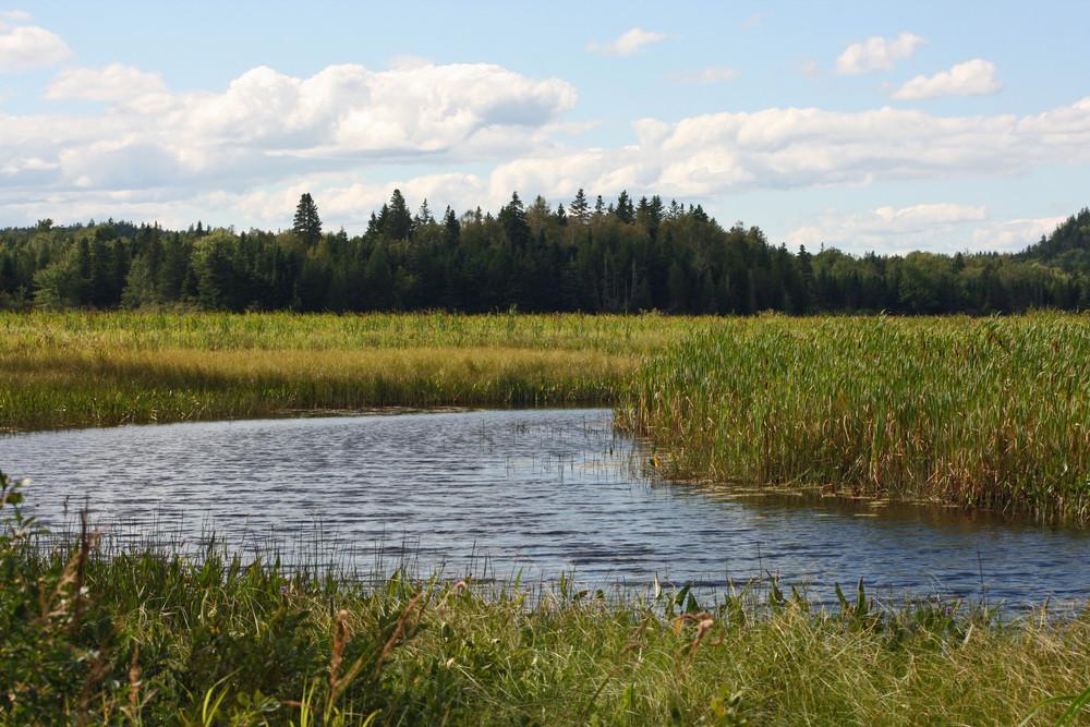 Reynolds Brook (Credit: L. L. Wall (Panoramio))