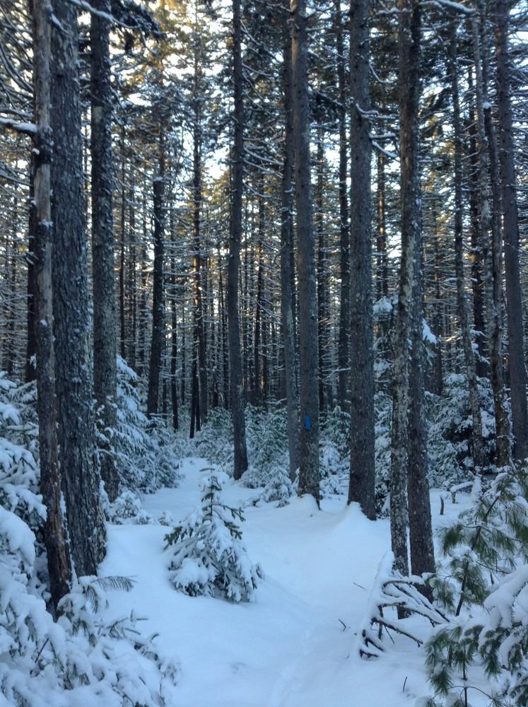 Winter walk (Credit: Nicole Grohoski)