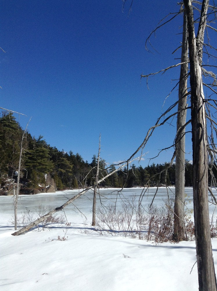 Frozen Mud Pond (Credit: Nicole Grohoski)