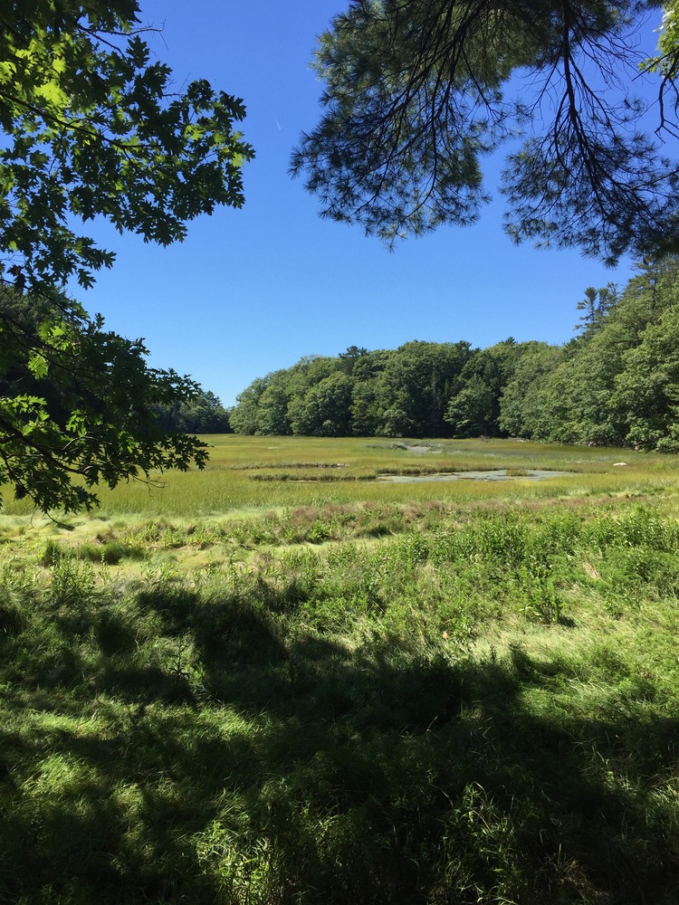 View of the estuary from the Farm Loop Trail (Credit: Maine Trail Finder)