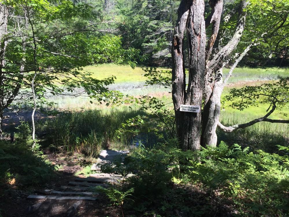 Heron Hideaway (Credit: Maine Trail Finder)