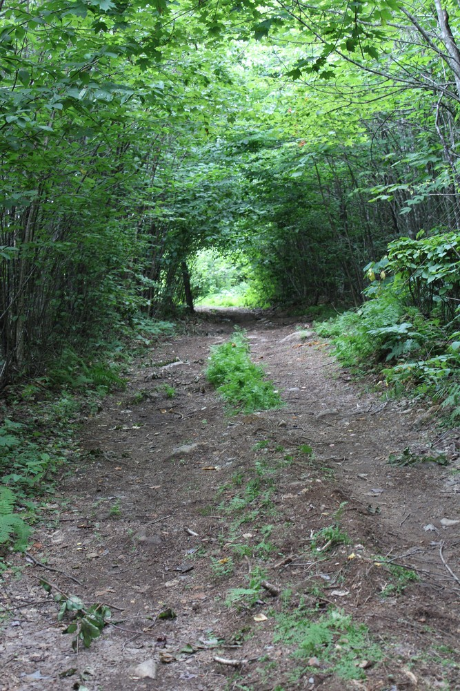 Forested lane (Credit: Woodie Wheaton Land Trust)
