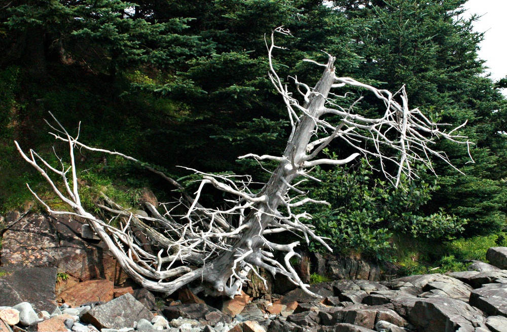Skeleton at the Shoreline (Credit: L. L. Wall @Panoramio)