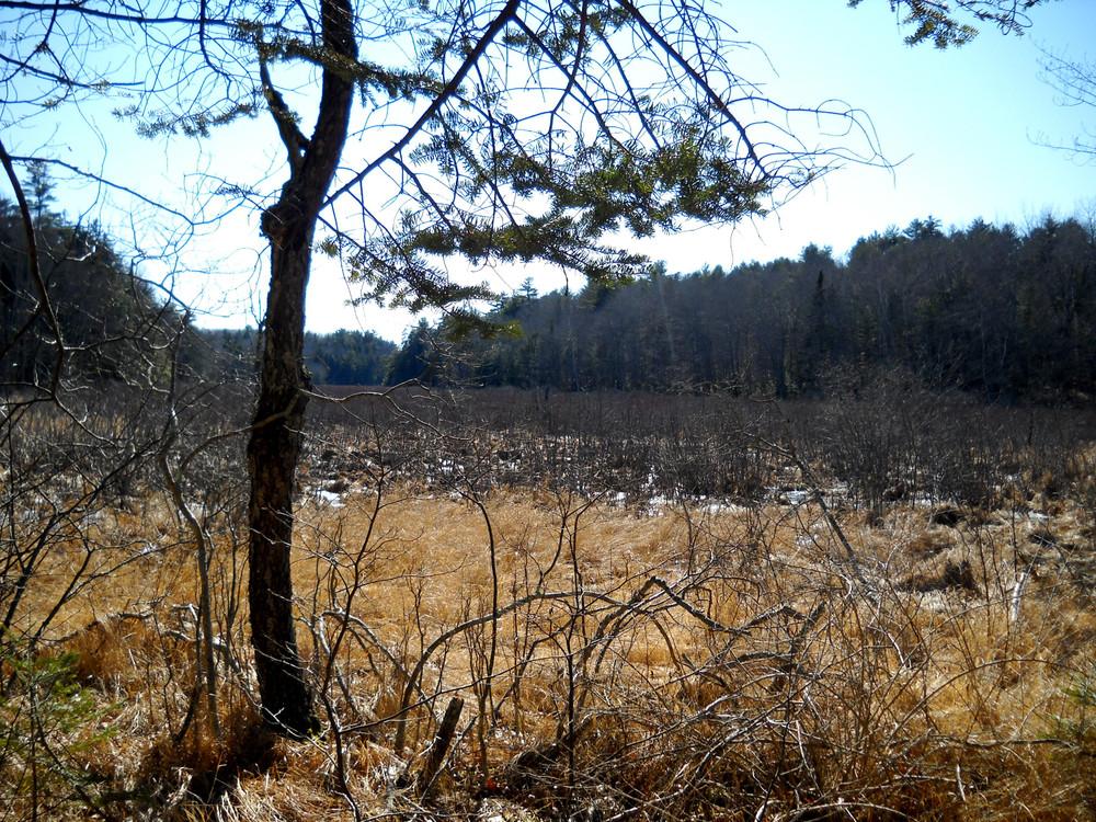 Jonathan Morse Meadow (Credit: Phippsburg Land Trust)