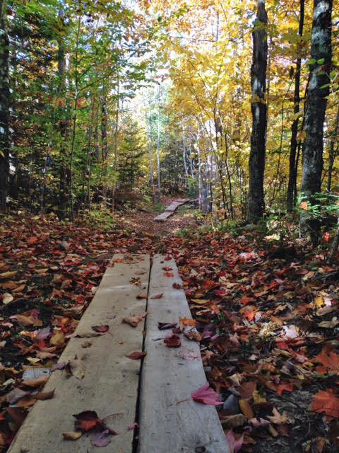 Bog bridging in fall (Credit: ME BPL)