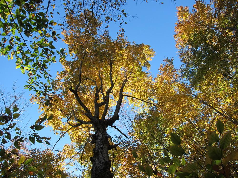 Trail trees (Credit: M. Morris)