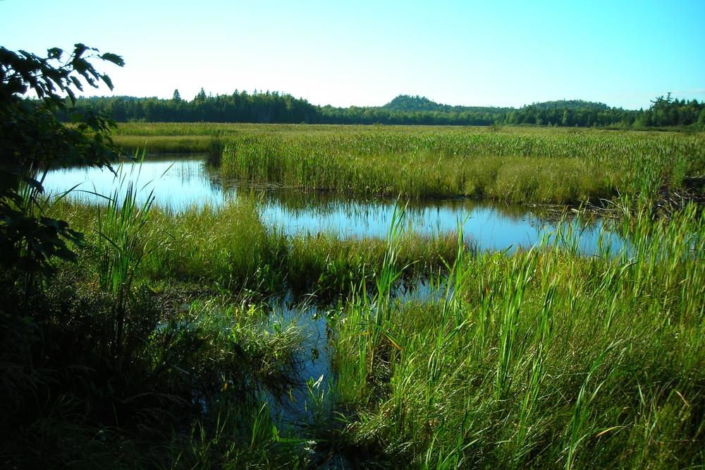 Reynolds Marsh (Credit: Downeast Coastal Conservancy)