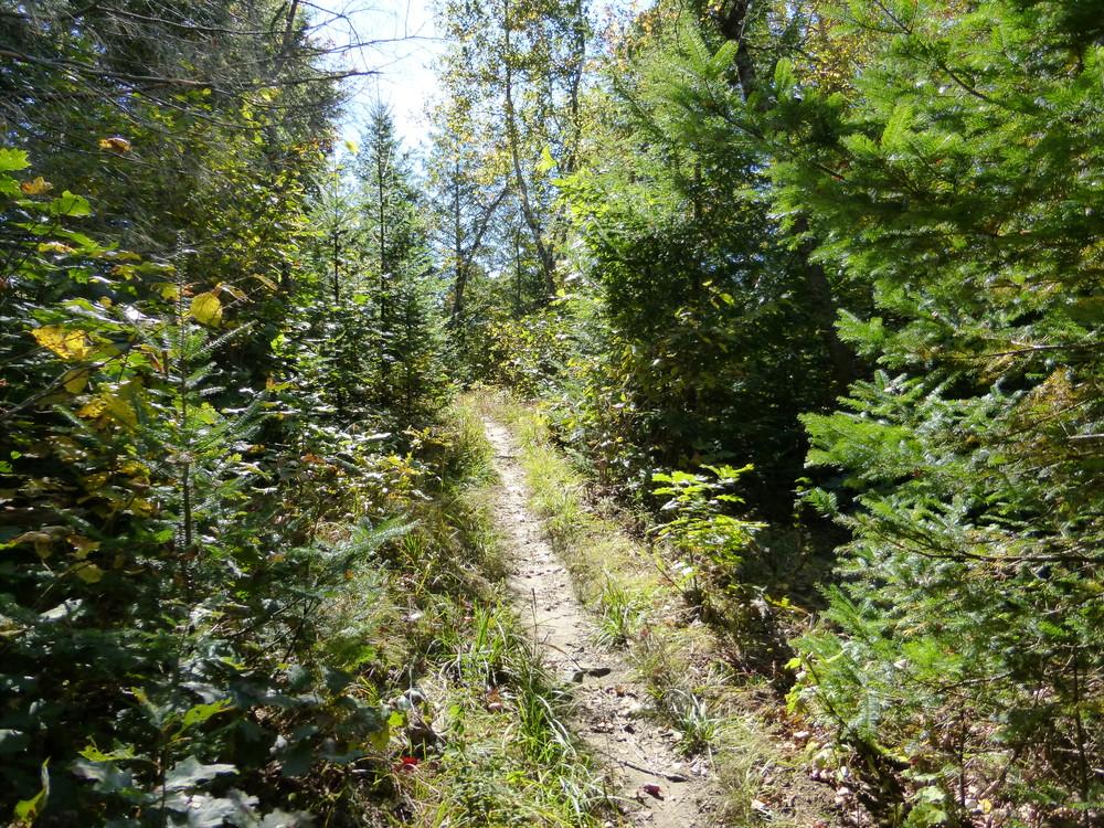 Messalonskee Stream trail.
