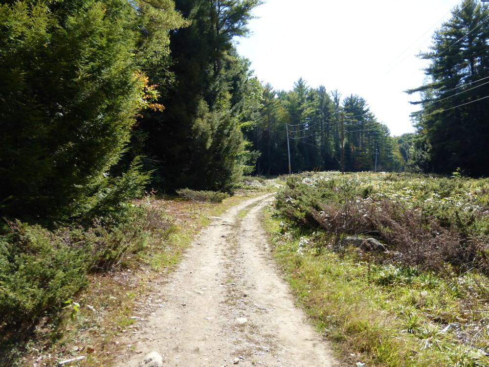 Messalonskee Stream trail - hooking into ATV trails. (Credit: Chris Nason)
