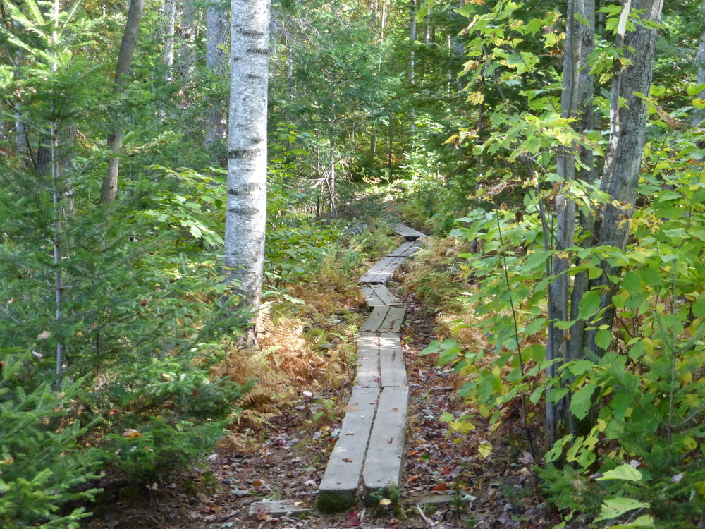 Messalonskee Stream Trail (Credit: Chris Nason)