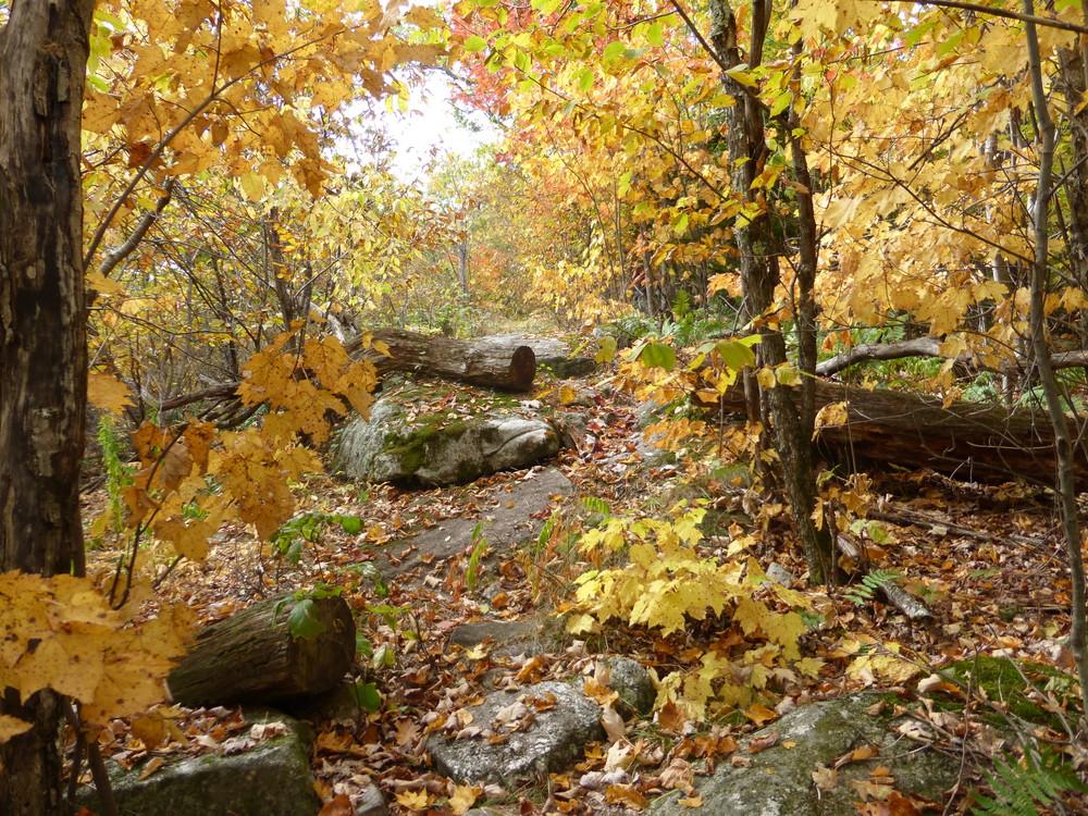 The trail (Credit: Chris Nason)