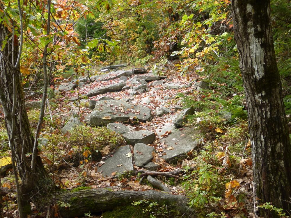 Trail (Credit: Chris Nason)
