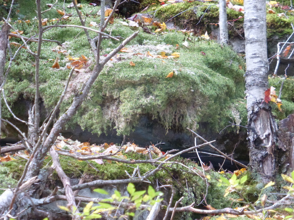 Beautiful moss overhangs the rocks in places along the trail. (Credit: Chris Nason)