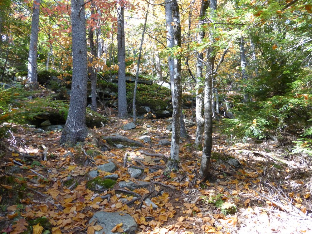 The trail is beautiful and quiet in the fall. (Credit: Chris Nason)