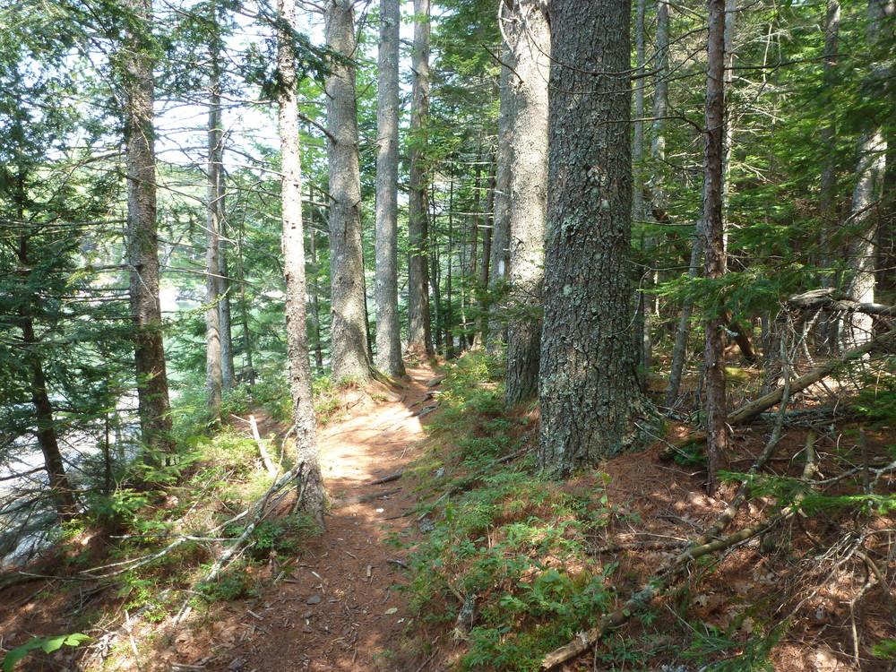 OM West Trail (Credit: Chris Nason)