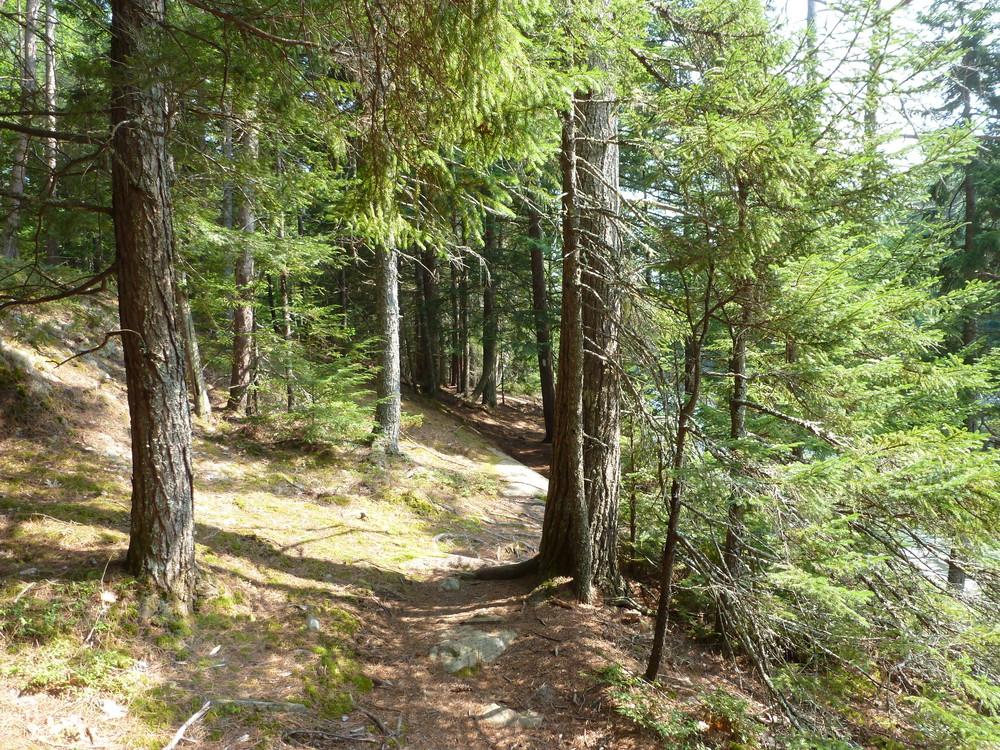 OM East trail (Credit: Chris Nason)