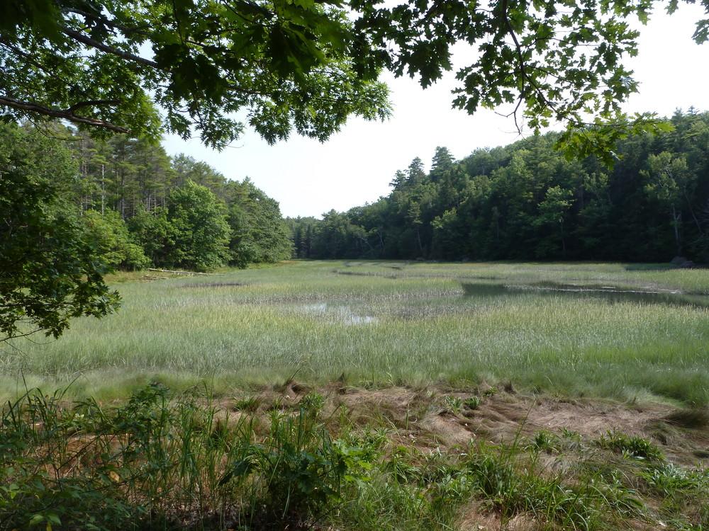Salwater marsh from OM East (Credit: Chris Nason)