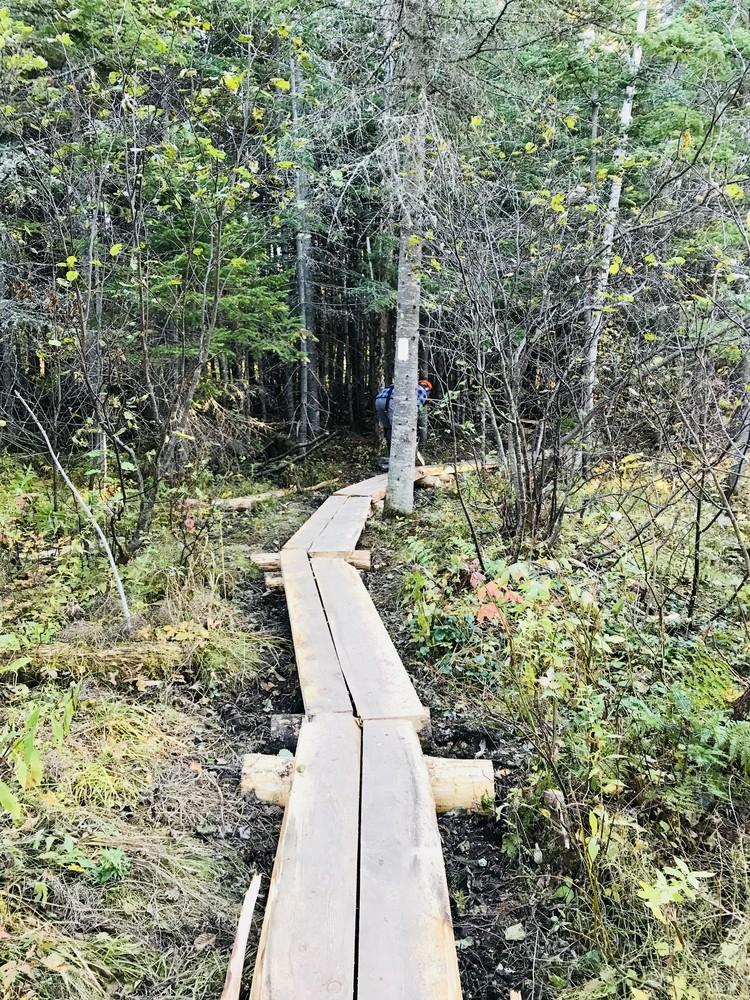 Bog Bridging (Credit: RLHT)