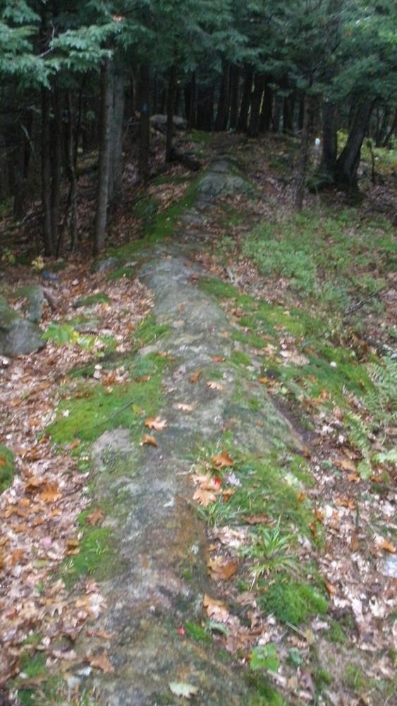 Ridge Trail (Credit: Laura Keating)